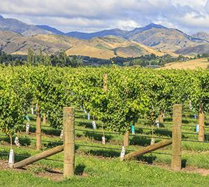 New Zealand Wine Centre